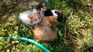pile o'kittens